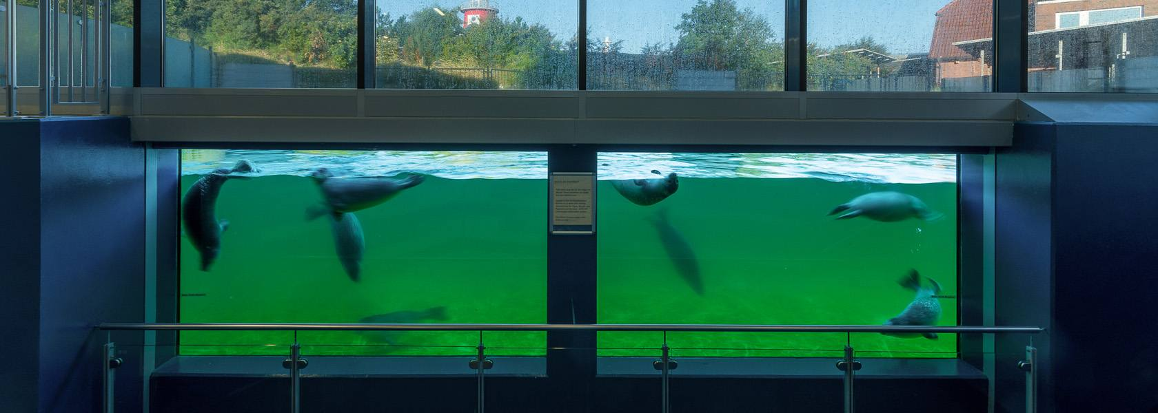 Unterwasserfenster der Seehundstation Nationalpark-Haus Norden-Norddeich, © Seehundstation Norddeich, Christian Ballé