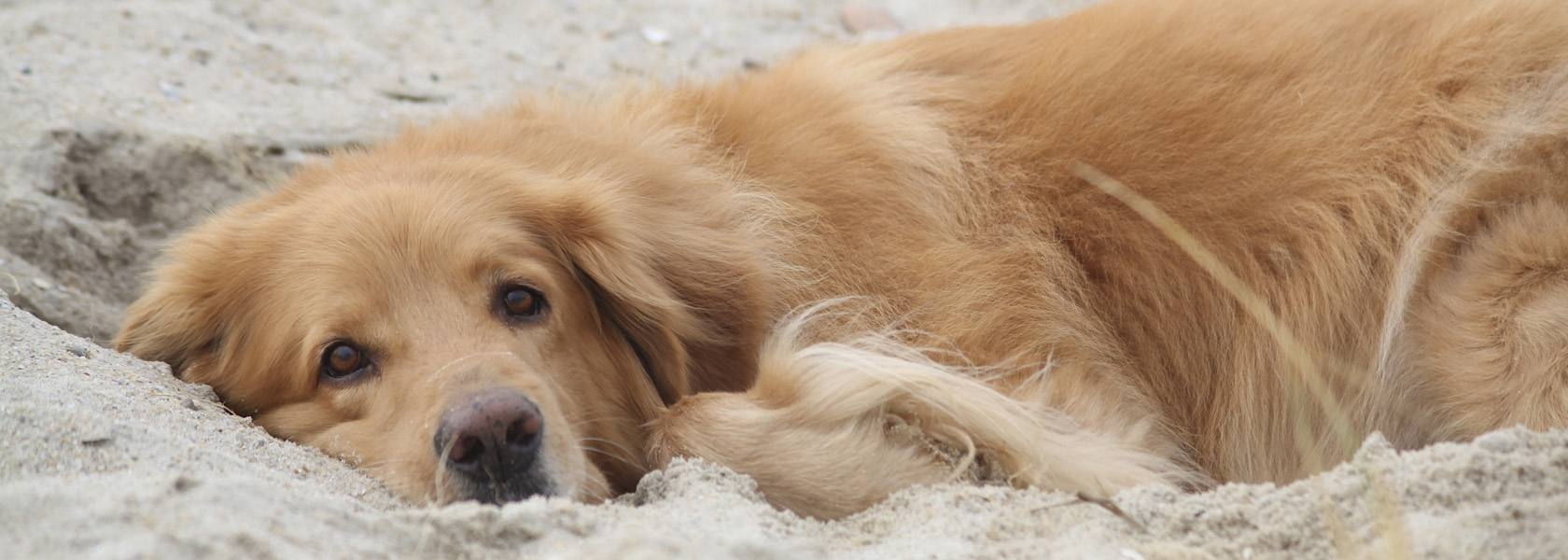 Hund am Strand, © Sven Vietense - Fotolia.com