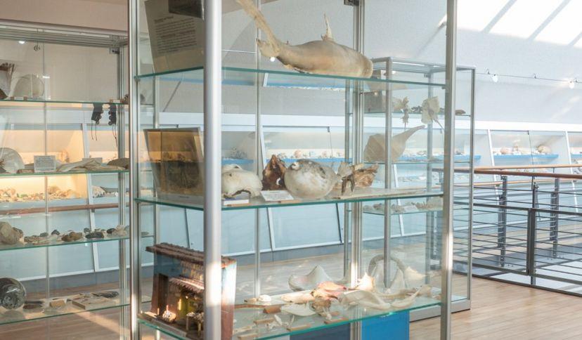 Muschelmuseum Spiekeroog, © Nordseebad Spiekeroog GmbH