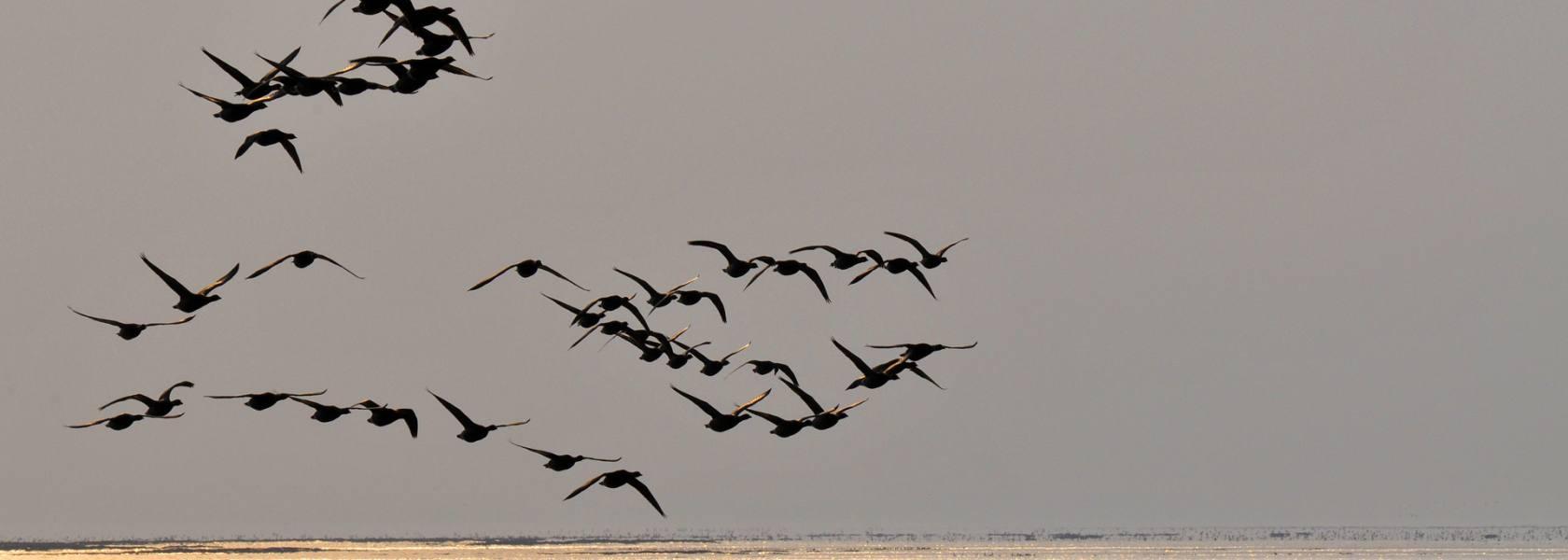 Zugvögel im Sonnenaufgang, © Beate Ulich