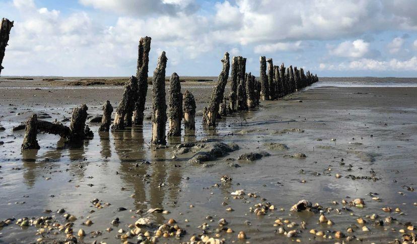 Wattenmeer mit Muscheln, © Die Nordsee GmbH