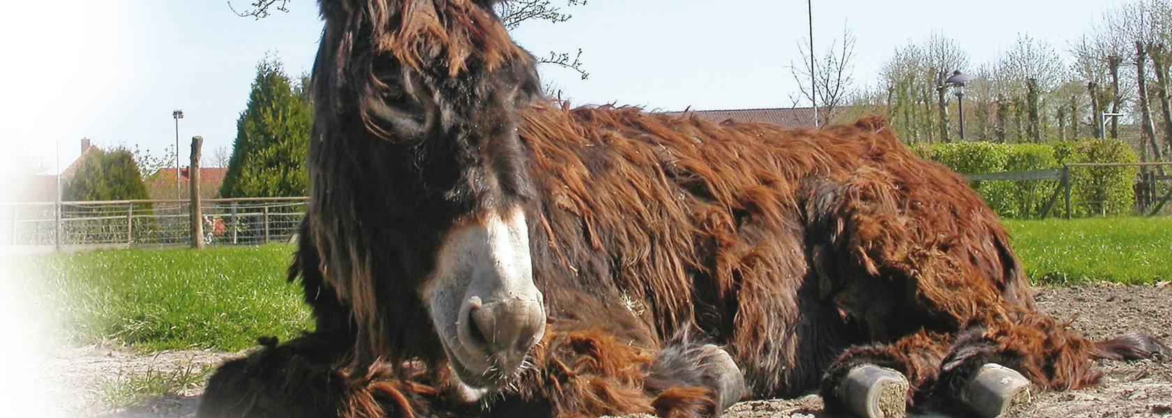 Esel im Haustierpark Werdum, © Heimat- und Verkehrsverein Werdum e.V.
