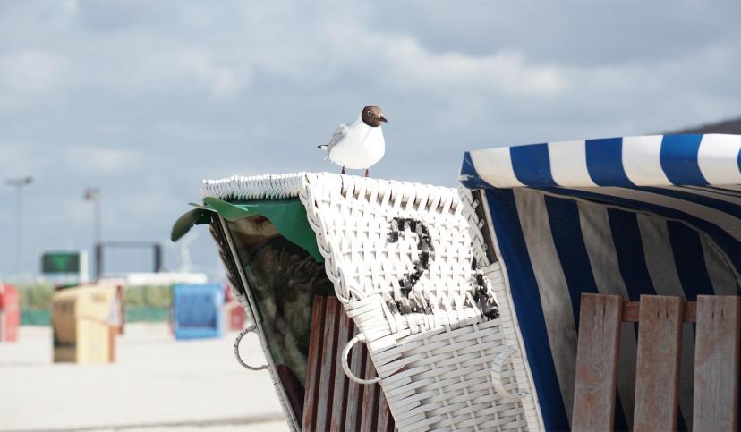 Strandkorb mit Möwe, © Katrin Koring