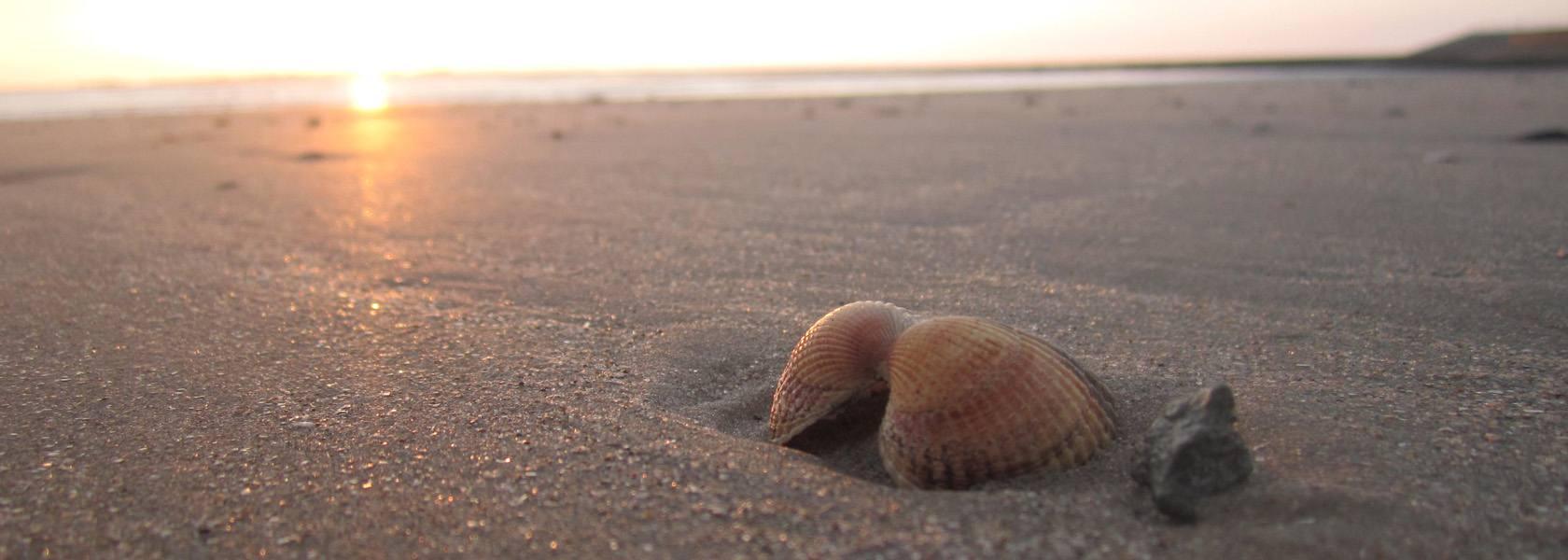 Muscheln am Strand, © Die Nordsee GmbH, Jantje Olchers