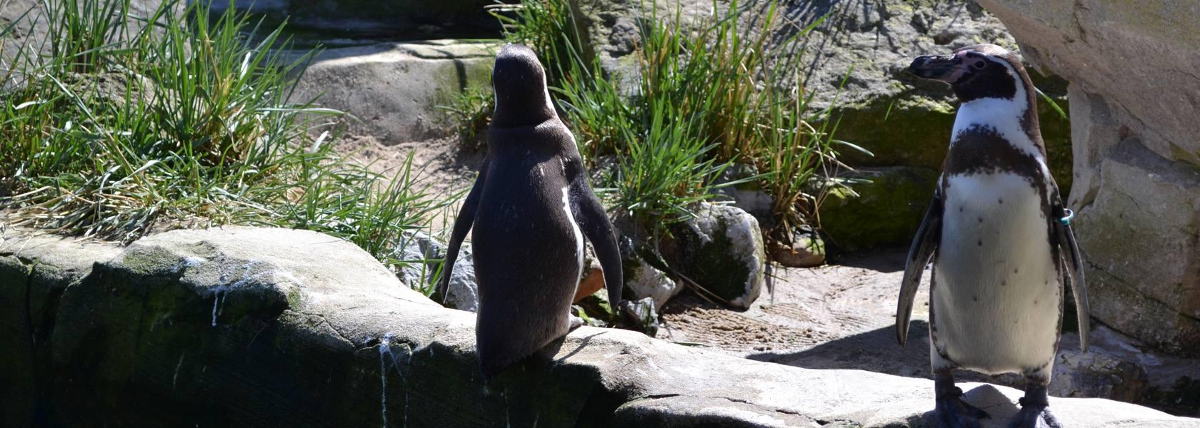 Zoo am Meer, © Mailin_Knoke, Erlebnis Bremerhaven GmbH