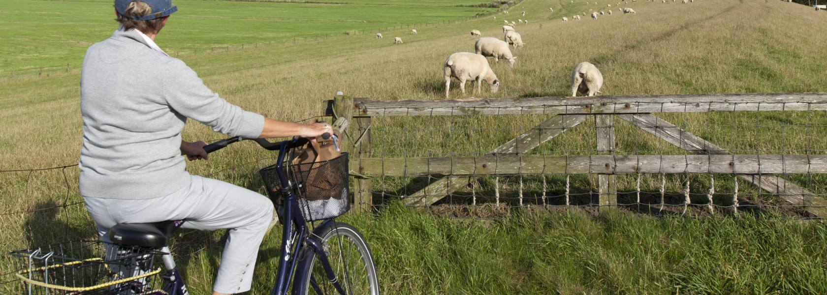Radfahren in Butjadingen, © Tourismus-Service-Butjadingen