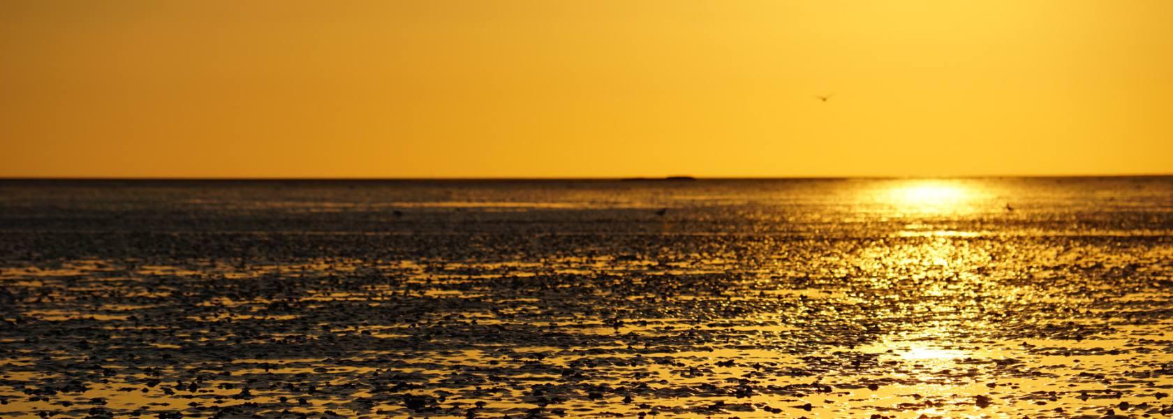 Wattenmeer im Sonnenuntergang, © Die Nordsee GmbH, Robin Schneider