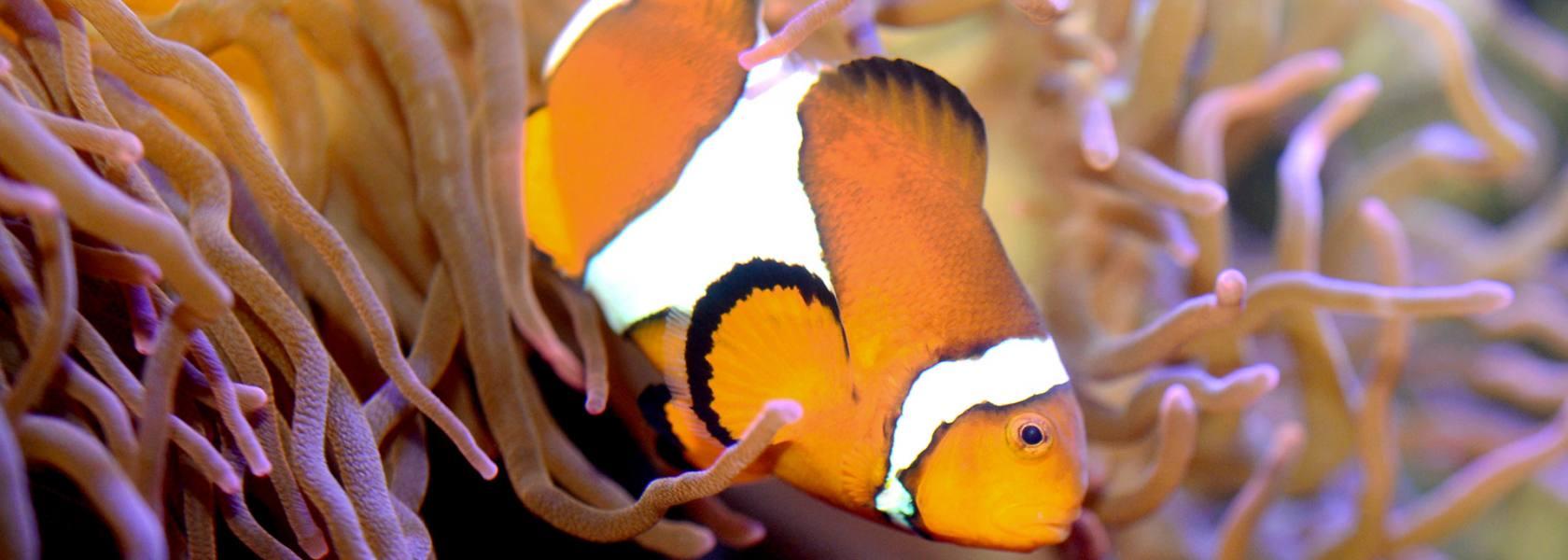 Aquarium in Wilhelmshaven, © Aquarium Wilhelmshaven Bullermeck GmbH